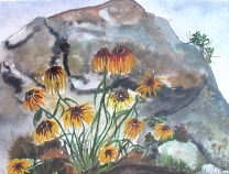 Canada-Black-Eyed Susan on the Rocks-Watercolour on Paper-Framed-(8X11)-$100