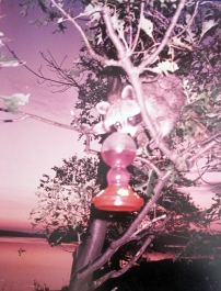 Canada-Trying to drink the Hummingbird's Water-Photo-(20X16)-$100
