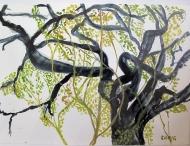 Savannah-Tree with Moss (7X9.5) Framed $60